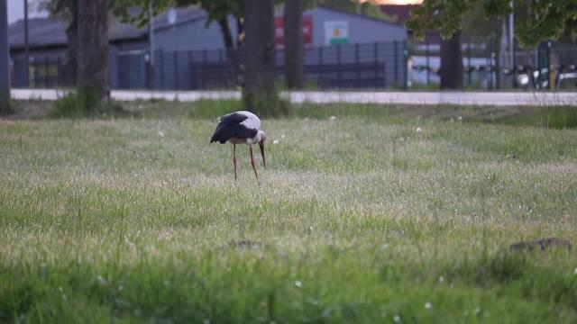 Storch in Bad Doberan